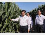 시진핑 중국 국가주석이 지린성의 옥수수 경작지를 시찰하고 있다. [CGTN]