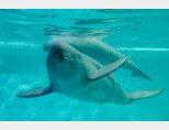 멸종위기종에 오른 토종 돌고래 상괭이.  [채널A]
