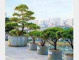 서울 중구 서울로7017에는 스파지오가 만든 대형 화분 600여 개가 자리하고 있다. [사진 제공 · 스파지오]