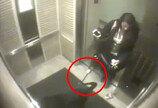 개 목줄 엘리베이터에 껴 대롱대롱…'끔찍한 실수'