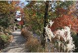 곤지암 화담숲, 가을 정취 물씬 '가을 야생화 전'