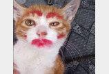'고양이에 립스틱 바르고, 팬티에 넣고 한 유튜버 만나보니'