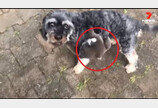 강아지 등에 올라탄 아기 코알라..'엄만 줄 알고'