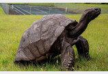 344년 동안 아프리카 왕실서 산 최고령 거북이..노환으로 숨져