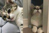홈 CCTV와 첫 대면한 고양이가 보인 반응..혼자 놀라 '냥들짝!'