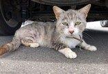 회사 밖서 구조한 슬픈 눈 고양이의 4개월 뒤 모습..표정이 사장님!