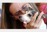 `강아지가 노견으로`..12년 만에 반려견 찾은 美견주