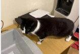트렁크서 왜 니가 나와?..영국 공항서 딱 걸린 고양이