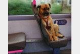 혼자 버스 탄 강아지..주인 나타나지 않자 절망한 표정