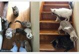 날마다 '고양이 피하기 게임'해야 하는 집사..계단을 못 내려가