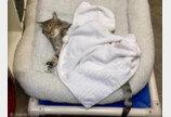 악명 높은 `보호소 탈출냥`..다른 고양이들까지 탈출시킨 이유는?