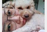 """'서브남주' 같은 애절한 얼굴로 """"주세요""""하는 강아지"""