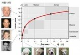 개 나이, 유전자로 계산하면 더 정확하다!