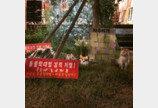 경의선 숲길 고양이 살해 30대..실형 선고에 항소
