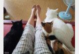 '냥이판 블랙팬서'..그루밍만으로 긴장감 조성하는 카리스마 고양이