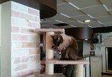 고양이가 헤어 스타일을 관리하는 방법