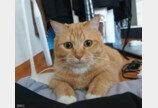 """집사가 화장실 문 닫고 들어가자 고양이가 보인 행동..""""왜 문 닫았냥!"""""""