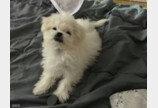 난방텐트가 주인과의 사이 가로막자 흉폭(?)하게 변한 아기 강아지