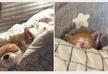 누나처럼 멋진 냥이 되고 싶어 '따라쟁이'된 아기 고양이..'미니어처 수준!'