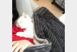"""""""가지 마라냥!""""..출근하는 집사 바짓단 잡고 늘어지는 고양이"""