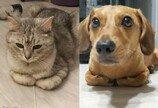 '퇴원한 아픈 고양이 지켜주려..' 옆을 떠나지 않는 막내 멍멍이