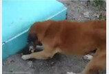 거리에서 죽은 새끼 고양이 발견하자 땅에 묻어준 개