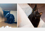 입양 전후 180도 달라진 고양이 모습 공개한 집사들..'이것이 집사의 힘'