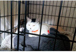 '최소 목숨 200개'..지하철 250대 지나간 선로서 구조된 운 좋은 고양이