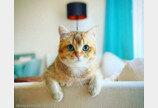 """집사가 물 마시려고만 하면 달려와 뺏어 먹는 고양이..""""내꺼다냥!"""""""