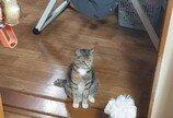 '놀고 싶은데 무서워..' 잠든 고양이 깨우는 강아지의 소심한 앞발 톡톡