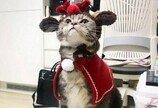 '냥이 약점은 등?'..등에 올려놓은 인형 찾느라 바쁜 '냥충미' 고양이