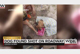 머리에 두 발의 총상 입고 발견된 리트리버, 결국 무지개다리 건너