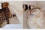 """""""집사 안 말리고 뭐하냥!""""..동생한테 냥펀치 맞고 '억울상' 된 고양이"""