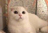 집사가 사준 인형 베개로 쓰는 고양이..'냥생 n년차 묘르신 포스'