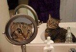 """""""내가 고양이라니""""..확대경 거울 들여다보고 충격에 빠진 고양이"""