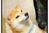 소파 밑에 들어간 강아지의 '웃픈' 몰골..지켜보던 친구개도 빵 터져