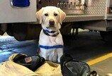 """응급실서 코로나19 환자 치료하느라 지친 의사 곁 지키는 강아지..""""덕분에 버텨"""""""