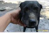 한밤중 집에 침입한 1m 코브라 격퇴한 강아지..덕분에 가족 무사해