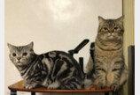 할머니 집서 한 달 살이한 결과..폭풍 확대돼 집사 당황케 한 고양이
