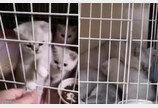 코로나19로 집사와 40일간 떨어져 산 고양이..빈집서 건강하게 출산까지