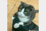 """집사가 네일 받자 같이 발 내미는 고양이..""""hoxy 나도 해주겠나옹?"""""""