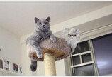"""반신욕하는 집사 보고 식겁해 소리 지르는 고양이..""""위험하다냥!"""""""