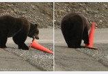 친구 곰이 넘어트린 안전콘 다시 세워놓고 간 천사 야생곰