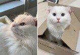 """""""날 데려가라!""""..출근하는 집사 치마 붙잡고 버티기 한 판 돌입한 고양이"""