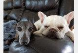 의사 표현 확실한 강아지들의 목욕과 산책 반응 차이..'이 온도차 무엇?'