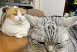 """""""아크로바틱 시술입니다만""""..동생의 거친 두피 마사지에 당황한 고양이"""