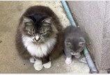 """""""너로 정했다옹""""..아기 맡길 집사 간택 후 인사차 방문한 엄마 고양이"""