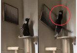 심각하게 그림 감상하던 고양이, 10초 후 반전은?..'캣타워인 줄'
