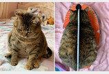 눈사람 몸매 때문에 '뚠냥이'로 오해받는 고양이의 반전 몸무게