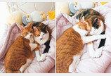 '아가 때 버릇 그대로'..침대 머리를 파이프라고 생각하는 고양이